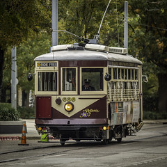 McKinney Avenue Trolley (Mabry Campbell) Tags: road street november usa man person photography photo dallas texas photographer unitedstates image fav50 trolley tx free tags fav20 photograph commercial transportation 100 petunia fav30 client f28 squarecrop oneperson conductor fineartphotography mabry 2014 200mm architecturalphotography dallascounty cityofdallas colorimage commercialphotography fav10 uptowndallas fav40 fav60 architecturephotography ef200mmf28liiusm electrictrolley uptownhouston commercialphotographer 3500mapleavenue mckinneyavenuetransitauthority fineartphotographer architecturalphotographer houstonphotographer freetransportation 3500maple architecturephotographer sec cassidyturley mabrycampbell bridgerconway november142014 20141114h6a9893