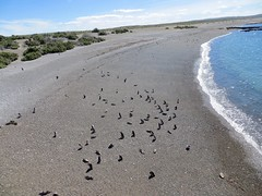 Puerto Madryn-82