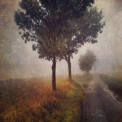 The never ending road (Sarah Jarrett) Tags: autumn trees fog landscape norfolk textured memoriesbook sarahjarrett