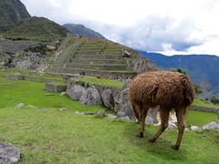Machu Picchu-183