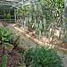 serie (3) Trompenburg tuinen en arboretum