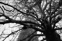 Deep (Mark Brim) Tags: urban building film overgrown analog zeiss 35mm landscape fuji mtl walk 5 decay ruin jena explore 400 discovery praktica wander discover urbex urbanite overrun filmisnotdead filmfeed buyfilmnotmegapixels