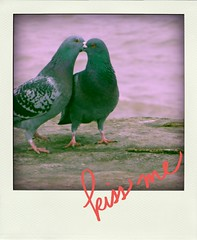 Love Birds (k8rry) Tags: wall kissing harbour aviary pidgeons inlove bridlington poladroid aviaryforandroid