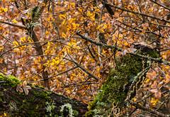 automne (bobpado) Tags: nature automne canon couleurs 100mm provence 60d