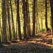 Fern Rock Nature Trail (6)