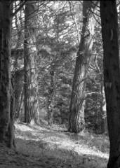 Trois arbres (michel.lample) Tags: france michel finistere plouguerneau lample treespyrocathdfomapansymmarlinhof
