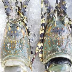 Thaiiptv#รายการตามตะวัน ทริปนี้พาท่านไปทาน#อาหารทะเลที่ #เชียงใหม่  ทั้งสด #อร่อย เจ้าของร้านรุ่นใหม่  #คุณสาโรช ศรีชะบา  คัดสรรวัตถุดิบ#อาหารทะเลทั้งกุ้ง หอย ปู ปลา สั่งตรงจากทะเล จ.สุราษฎร์ธานี จัดเมนูเด็ดพร้อมต้อนรับนักชิม  #ร้านอัยย์ซีฟู๊ดตั้งอยู่ ต.ส