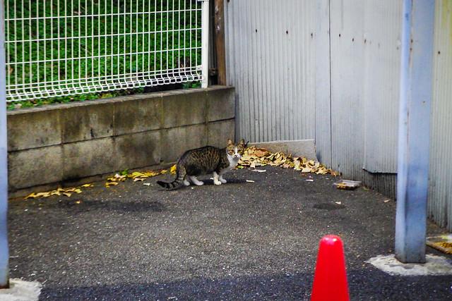 Today's Cat@2014-12-10