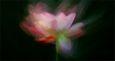 Lotus Flower Paintings / images using Akvis Oil Paint Filter (Bahman Farzad) Tags: china flower wall painting cambodia paint image lotus drawing paintings drawings vietnam filter oil budha decor based walldecor lotusflower walldecorations floraldecorations interiordecorations akvis imagebased lotusflowerpainting imagebasedoilpaint imagebasedlotusflowerpainting lotusflowerpaint lotusflowerpaintings lotusfloweroilpaintings paintingsoflotusflowers lotusfloweroilpainting