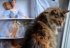 Photobombed (I'magrandma) Tags: she cat feline doll ben barbie kitty her femalecat photobombed