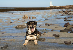 25april_gardskagaviti_042 (Stefn H. Kristinsson) Tags: dog playing beach spring sand venus april hundur clearsky strnd 2016 tamron2875 garskagaviti nikond800
