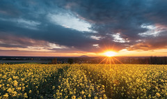 Sunset with flowers (Zoli Tl) Tags: d750 20mm nikkor