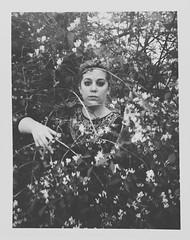 Day 002 (H o l l y.) Tags: camera flowers summer portrait bw white black color film nature girl face self vintage polaroid photo bush fuji dof no retro indie land instant 3000b
