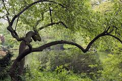Favorite Tree (Joe Josephs: 2,650,890 views - thank you) Tags: nyc newyorkcity newyork landscapes centralpark photojournalism centralparknewyork urbanlandscapes travelphotography landscapephotography cityparks urbanparks copyrightjoejosephsphotography