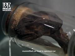 mcatheadjar1 (Internet & Digital) Tags: cats ancient god hawk victorian egypt ibis horus ritual mummy isis sacrifice osirus ancientegypt offerings mummified thoth mummifiedcats