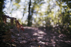Untitled (Armin Schuhmann) Tags: road old trees red wild canada tree film nature leaves analog forest 35mm vintage lens landscape outdoors prime haze berry woods nikon focus berries dof natural quebec bokeh path montreal f14 n wideangle 200asa ishootfilm scan foliage trail automn filter vista radioactive pelicula analogue manual filme nikkor agfa argentique filmscan nikomat nikkormat analogic selfdeveloped c41 filmphotography 2015 ft2 unicolor lanthanum shootfilm filmphoto filmisnotdead analogo l37 believeinfilm buyfilmnotmegapixels