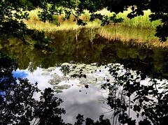La Gouille  Marion (eliseroux1) Tags: life trees nature water circle photography natural reserve reflect leafs