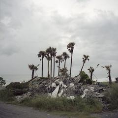 regeneration (Tom Kondrat) Tags: trees sea 120 6x6 film mediumformat taiwan before palm pile analogue mamiya6 nets typhoon dujuan kodakportra160 typhoonblues