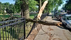 Tree Limb Down in Fuller Park #4 (artistmac) Tags: park street chicago tree fence illinois outdoor wroughtiron il repair fallen southside bent limb fuller fullerpark michaelbrown superintendent workorder blowndown hispark lethimactlikeitforachange