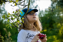 helping daddy with photostream (pajus79) Tags: flower colour tree apple look hat leaves garden photo kid search nikon branch child shot blossom bokeh background exploring watch daughter dorotka study bloom capture measure 10528 d80