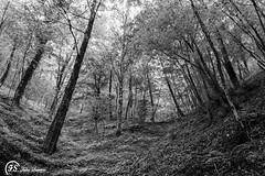 La cupa foresta (Fabio Scarano) Tags: bw white black tree nature forest landscape leaf natura fabio bn spooky terror foglia albero bianco nero hollow foresta terrore cupo cupa spaventosa scarano
