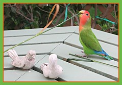 The Big Stretch (bigbrowneyez) Tags: bird lovebird peachfacedlovebird uccello bello uccellino tiny colourful sweet adorable grass bladeofgrass nature wings feathers fun funny dolce mygarden deck striking beautiful lovely pretty stretch delight delightful silly colours fresh love joy joyful pet sweetie cutiepie thebigstretch wood