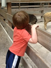 "Paul at the Petting Zoo at the Kansas City Zoo • <a style=""font-size:0.8em;"" href=""http://www.flickr.com/photos/109120354@N07/27821709286/"" target=""_blank"">View on Flickr</a>"