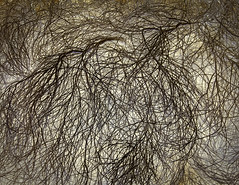 'Desert Scrub #14' by Richard Misrach (Greatest Paka Photography) Tags: scrubbrush tangle richardmisrach photographer largescale sfmoma museum desertscrub desert sanfrancisco art