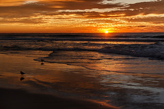 Sunrise in Surfers Paradise (kanishkaiddawela) Tags: ocean sunrise shore sea beach outdoor sky coast