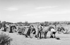 RAD20160610_016 - Munga Thirri Expedition,  (Kodak BW400CN) (Cecilia Temperli) Tags: rad20160610 arollinadayadayinaroll australia camelexpedition camels trekking desert packcamels film kodak kodakbw400cn nikon nikonfm3a simpsondesert mungathirrisurveyexpedition dromedary australiandesertexpeditions