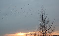 Zonsopkomst 12122015 2 (megegj)) Tags: winter sunrise gert zonsopkomst