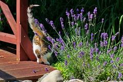 IMG_2989 (d_fust) Tags: fust katze cat pauline