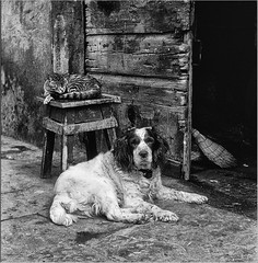 Vecchi amici - two old companions (fauglia2003) Tags: cane gatto ammici vecchi