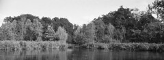 Xpark (Arne Kuilman) Tags: amsterdam nikon f100 35mm dx dxlensonfx analogue xp2 ilford scan v600 film nederland netherlands drjacpthijssepark terbraak amstelveen heemtuin park bridge pond vijver