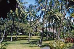 Royal Hawaiian Gardens 1956 (Kamaaina56) Tags: 1950s waikiki hawaii royalhawaiian hotel slide