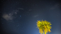 Rimini by night (Jessica Bizzoni) Tags: rimini astrophotography nightsky stars palm
