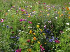 Random snaps from France 1 - flower field (jonathan charles photo) Tags: france art topf25 photo jonathan charles gourvillette