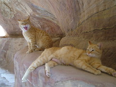 Petra: gatti nel Siq (costagar51) Tags: petra giordania jordan animali natura panoramafotogrfico contactgroups thebestofmimamorsgroups natureselegantshots theoriginalgoldseal