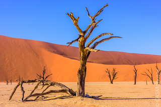 Dead Vlei pan at Sossusvlei