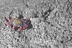 #12. Zodiac Signs (Melanie Delgado Phillips) Tags: sea nature animals mar cancer crab zodiac cangrejo zodiaco horscopo 114picturesin2014