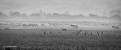 Foto safari OVP_029_2014-Wilvis ME.jpg (Wiljanvisser) Tags: 2014 oostvaarderplassen jaarboek14
