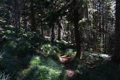 Murky forest (rozoneill) Tags: mountain lake oregon forest hiking lookout trail national wilderness waldo willamette wsweekly105