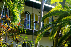 Key West Hemingways House (LMostazo) Tags: sunset people colors beautiful museum port palms florida move palmeras museo keywest hemingway ernesthemingway beautifulhouse thekeys casamuseo