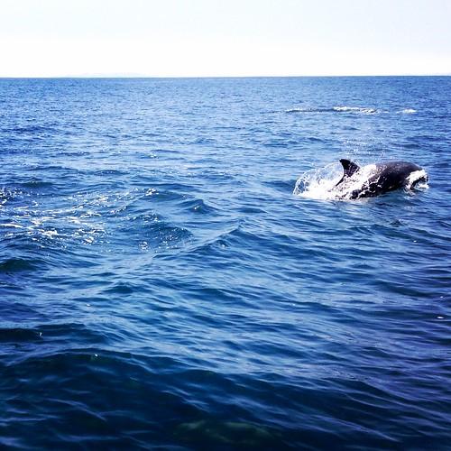 The Fin Whale, Isla Damas, Pingüino de Humboldt National Reserve, Chile.