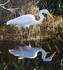 _AAA3289.jpg (Lake Worth) Tags: bird nature birds animal animals canon wings wildlife feathers wetlands everglades waterbirds southflorida 2xextender sigma120300f28dgoshsmsports