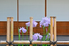 Irises in front of the teahouse (the.bryce) Tags: japan hiroshima shukkeiengarden
