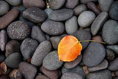 One (shumpei_sano_exp4) Tags: autumn fall nature rock stone outdoors leaf minimal challengeyouwinner shotsilove