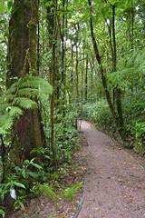 Reserva Biológica Bosque Nuboso Monteverde (Cultuurbarbaar71) Tags: monteverde cloudforest nevelwoud