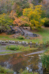 _MG_1541HDR.jpg (MD & MD) Tags: newyorkcity november newyork fall outdoors centralpark manhatten hdr 2014 hdrsoft