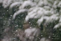 Snowfall (ALWIPA.com) Tags: trees white snow nature alberi focus experiment natura neve snowfall bianco manualfocus nevicata
